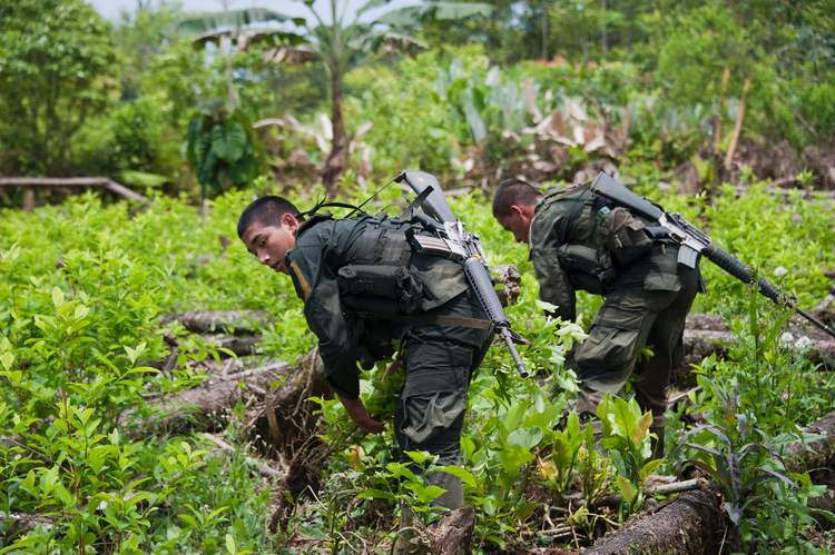 Colombian police officers destroy a coca plantation in a rural area of Tumaco, Colombia. The eradication effort is caught in an endless spiral: As soon as police end the task, new plants are sown. (Daniela Quintero/AFP/Getty Images)/p